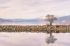 Árvore que cresce na reflexão do quebra-mar no lago calmo com as montanhas cobertos de neve na distância fotografia de stock