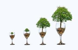 Árvore que de vidro da moeda da mão do dinheiro da economia do aumento do isolado da moeda da árvore a árvore cresce na pilha Din fotos de stock