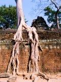 Árvore que engole ruínas em Ta Prohm Imagens de Stock