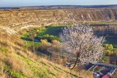 Árvore que floresce na montanha Imagem de Stock Royalty Free