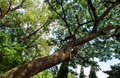 Árvore que inclina-se através da sombra do vento Foto de Stock