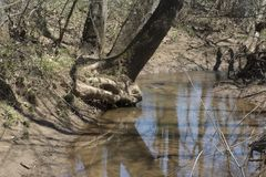 Árvore que inclina-se sobre a água imagem de stock royalty free