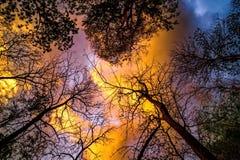 Árvore que olha acima, árvore inoperante Fotografia de Stock