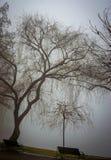 Árvore que paira a água no parque do IOR Fotos de Stock