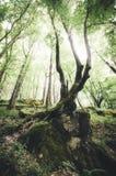 Árvore que pendura no penhasco na floresta verde Imagem de Stock Royalty Free