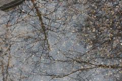Árvore que reflete na água Foto de Stock Royalty Free