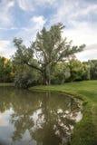 Árvore que reflete no lago em Utá Imagem de Stock