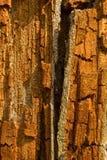 Árvore quebrada fotografia de stock