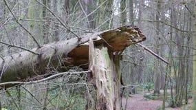 Árvore quebrada Imagem de Stock Royalty Free