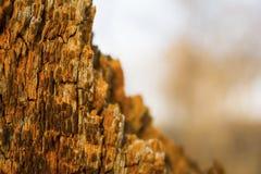 Árvore quebrada Imagens de Stock