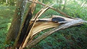 Árvore quebrada Foto de Stock