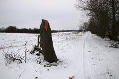 Árvore quebrada na extremidade da estrada imagem de stock