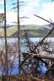 Árvore quebrada na floresta Fotos de Stock Royalty Free