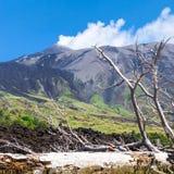 Árvore quebrada no fluxo de lava endurecido na inclinação de Etna imagens de stock royalty free