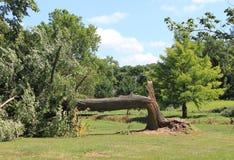 Árvore quebrada pela tempestade Foto de Stock