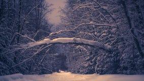 Árvore quebrada sobre o inverno, trajeto de floresta foto de stock royalty free