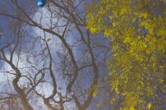 A árvore, ramos, deixa a reflexão na poça Conceito abstrato, artístico Imagens de Stock Royalty Free