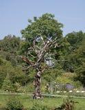 Árvore recicl Imagem de Stock