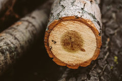 Árvore reduzida Foto de Stock Royalty Free