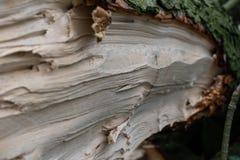 Árvore reduzida com musgo imagem de stock
