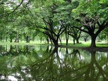 A árvore reflete o fundo Foto de Stock Royalty Free