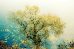 Árvore refletida na água Imagem de Stock Royalty Free