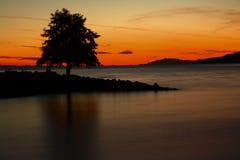 Árvore refletida no por do sol Imagens de Stock