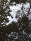 Árvore reflexo na água Fotos de Stock