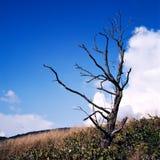 Árvore remota Fotografia de Stock
