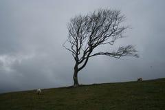 Árvore resistida Fotografia de Stock