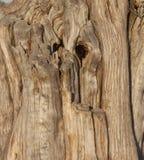 Árvore resistida, campo de batalha nacional de Manassas, VA Foto de Stock Royalty Free