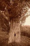 Árvore retro do Sepia de Grunge fotos de stock