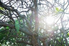 Árvore retroiluminada Fotografia de Stock Royalty Free
