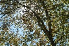 Árvore retroiluminada na região limítrofe fotos de stock royalty free