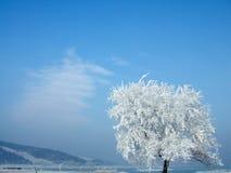 Árvore rimada Imagens de Stock Royalty Free