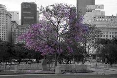 Árvore roxa Fotografia de Stock Royalty Free
