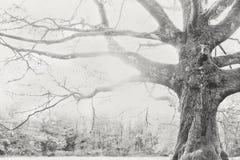Árvore sábia Fotos de Stock Royalty Free