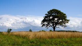 Árvore só Fotos de Stock Royalty Free