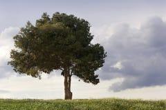 Árvore só. Fotos de Stock