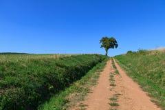 Árvore só Foto de Stock