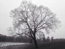 Árvore só Foto de Stock Royalty Free