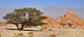 Árvore só Fotografia de Stock Royalty Free