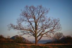 Árvore só Imagem de Stock Royalty Free