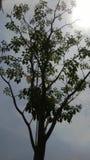 A árvore só imagens de stock