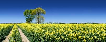 Árvore só ao lado de um trajeto rural que corre entre campos verdes foto de stock royalty free