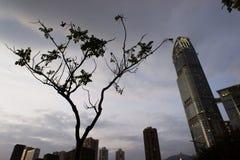 Árvore só com arranha-céus Imagem de Stock Royalty Free