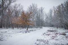 Árvore só com as folhas desvanecidas entre o parque do inverno e árvores leafless Imagens de Stock Royalty Free