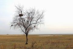 Árvore só com ninhos Imagens de Stock