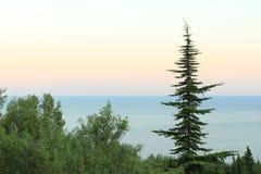 Árvore só contra o céu Imagens de Stock