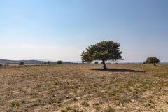 Árvore só da paisagem grega em terras estéreis imagens de stock